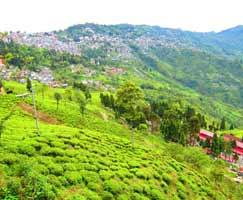 Honeymoon Tour To Darjeeling