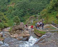 Darjeeling Vacation