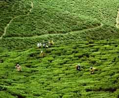 Darjeeling Holiday