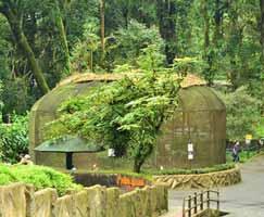 Darjeeling Tourism Honeymoon